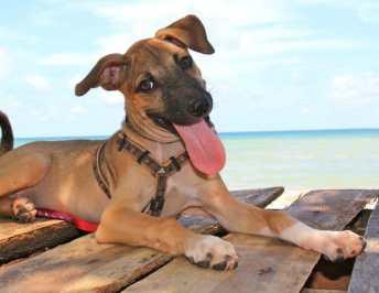 Volunteer In Thailand With Lanta Animal Welfare
