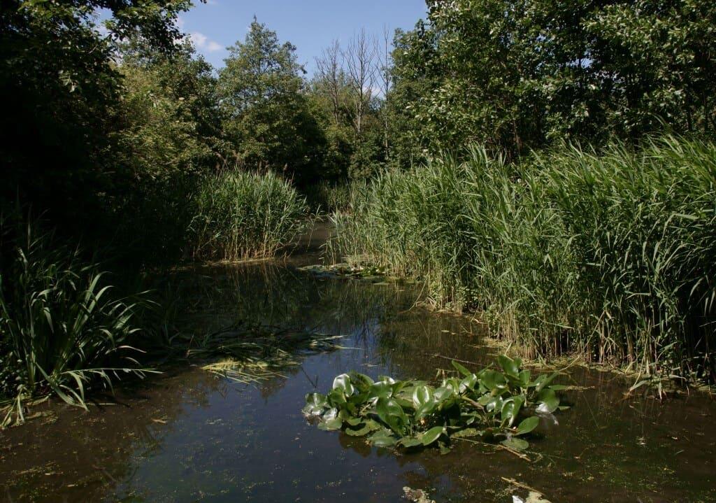 Camley Street Natural Park, Kings Cross