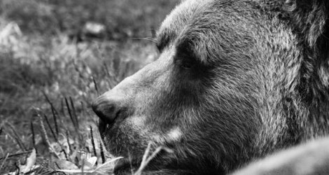 Český Krumlov: Depressed Bears