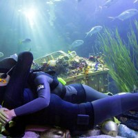 How to Shag your Scuba Instructor