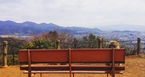 Kyoto: Arashiyama Bamboo Grove and Iwatayama Monkey Park