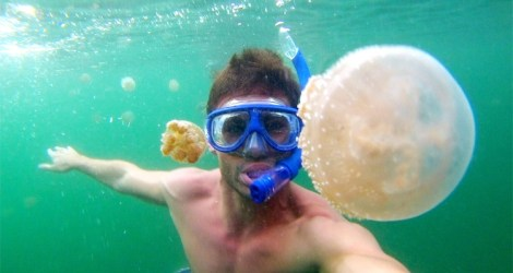 Swimming with Jellyfish in Sulawesi