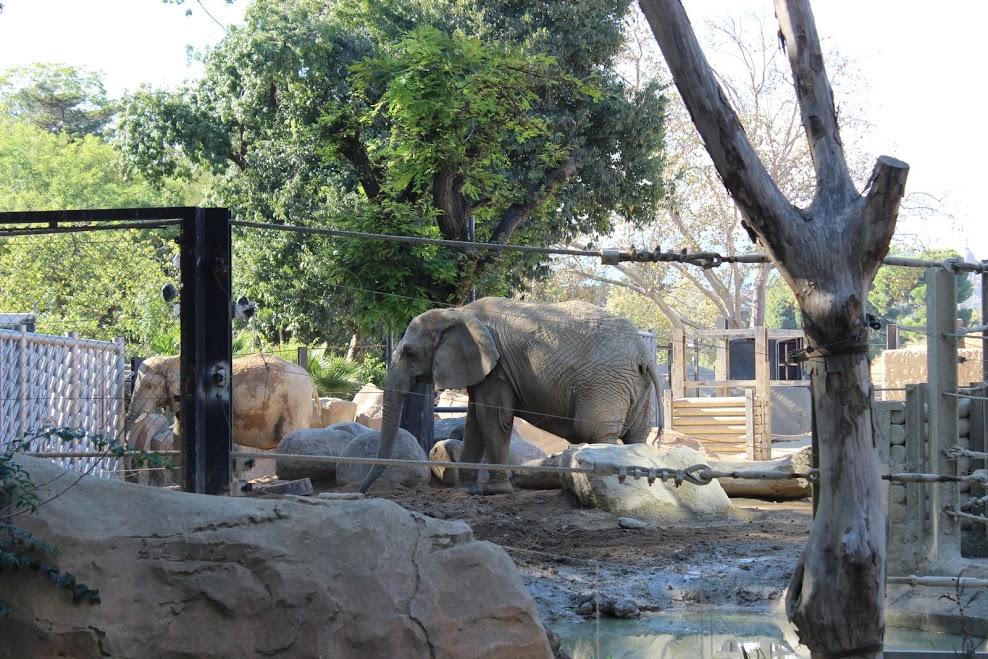 sad-elephants