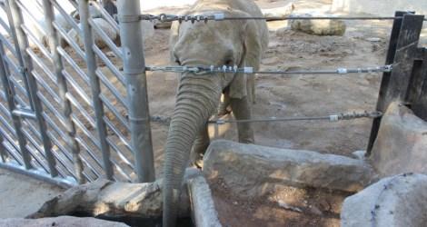Reality Check at Barcelona Zoo