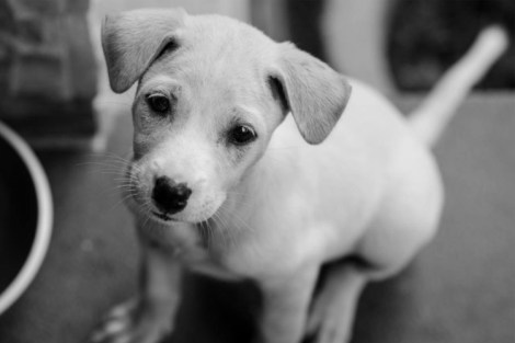 Is It Okay to Adopt a Street Dog on Holiday?