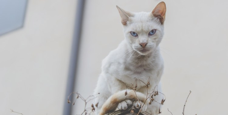A Strong Case for Vaccination: Bitten by a Rabid Cat
