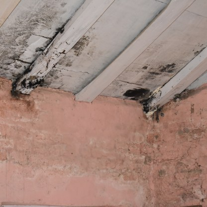Roof rot and mold in walls and roof