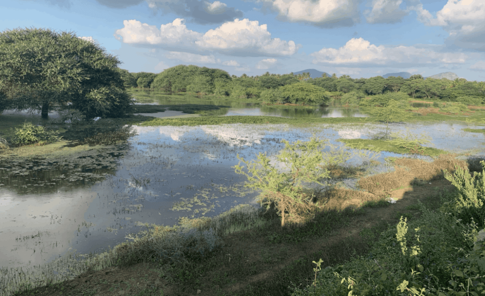A lake in Karnataka, India that is protected thanks to the work of ESG
