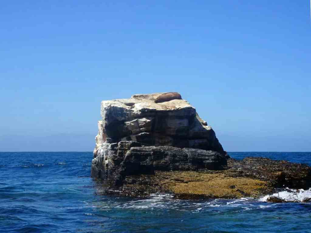 Seals on Isla Damas Chile
