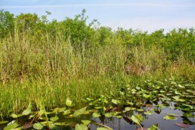 Everglades Rivier van Gras