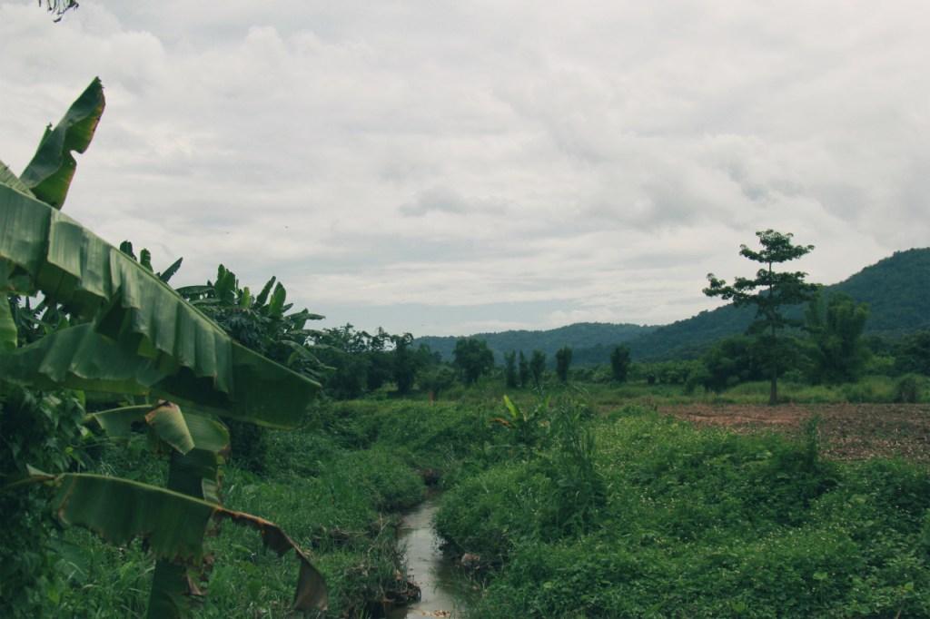 A wild untamed organic farm