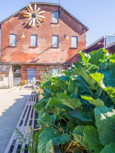 urban agriculture on the terrace