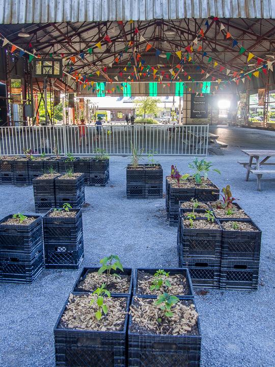 urban agriculture milk crates