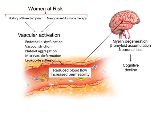 Sex pecific risk of cardiovascular disease and cognitive decline pregnancy and menopause - Global Medical Discovery