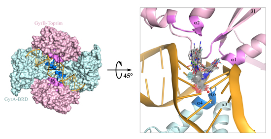 Cluster-based molecular docking study for in silico identification of novel 6-fluoroquinolones as potential inhibitors against mycobacterium tuberculosis - Global Medical Discovery