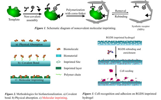 Thermo Responsive Hydrogel Layers Imprinted With Rgds