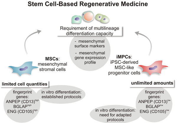 Functional Comparison of Human Induced Pluripotent Stem Cell-Derived Mesenchymal Cells and Bone Marrow-Derived Mesenchymal Stromal Cells from the Same Donor