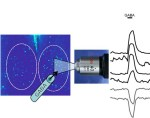 Seasonal induction of GABAergic excitation in the central mammalian clock.- . Global Medical Discovery