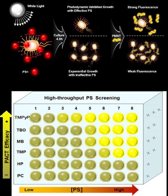 High-Throughput Screening of Antimicrobial photosensitizers. Global Medical Discovery