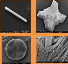 Control of calcium oxalate morphology through electrocrystallization as an electrochemical approach for preventing pathological disease