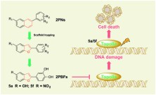 Design and synthesis of 2-phenylnaphthalenoids and 2-phenylbenzofuranoids as DNA topoisomerase inhibitors and antitumor agents. Global Medical Discovery feature