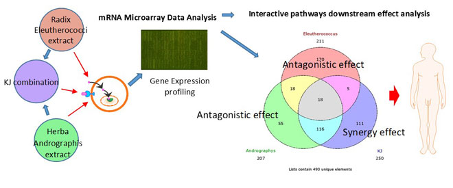 Synergy assessment of fixed combinations of Herba Andrographidis and Radix Eleutherococci extracts bytranscriptome-wide microarray profiling. Global Medical Discovery