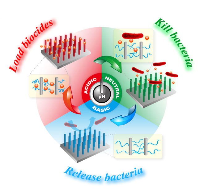 A Smart Antibacterial Surface for the On-Demand Killing and Releasing of Bacteria. Global Medical Discovery