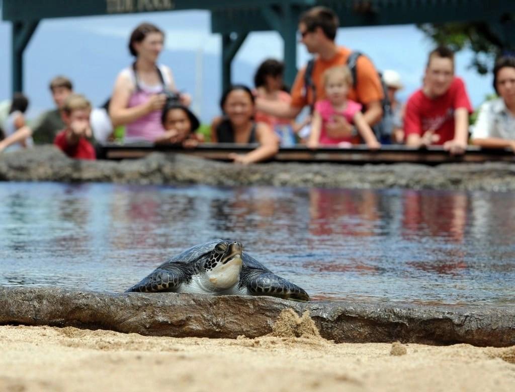Maui_Ocean_Center_Turtles