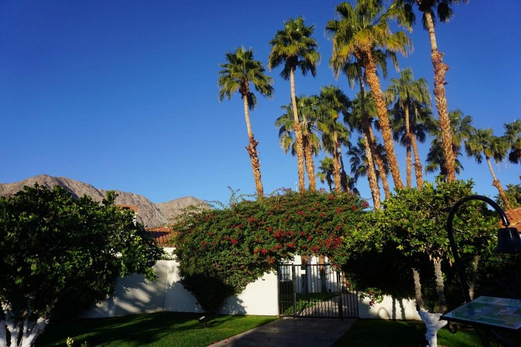 Palm Trees   La Quinta Resort   Palm Springs