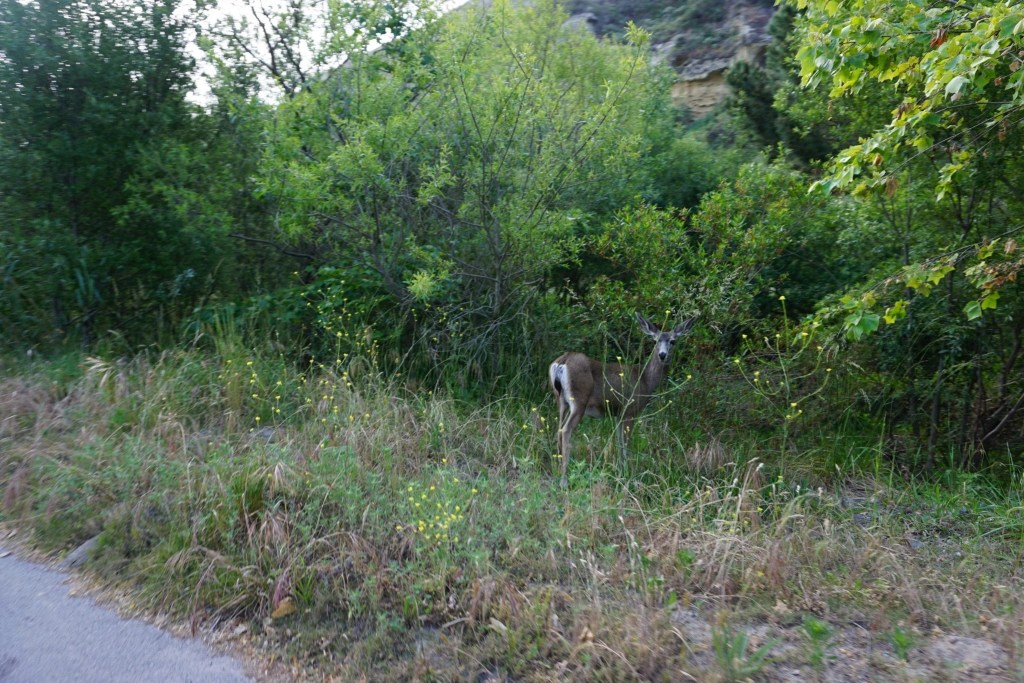 Gorgeous Mother Deer spotted at The Ranch at Laguna Beach