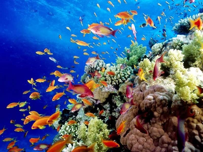 Great-Barrier-Reef-6