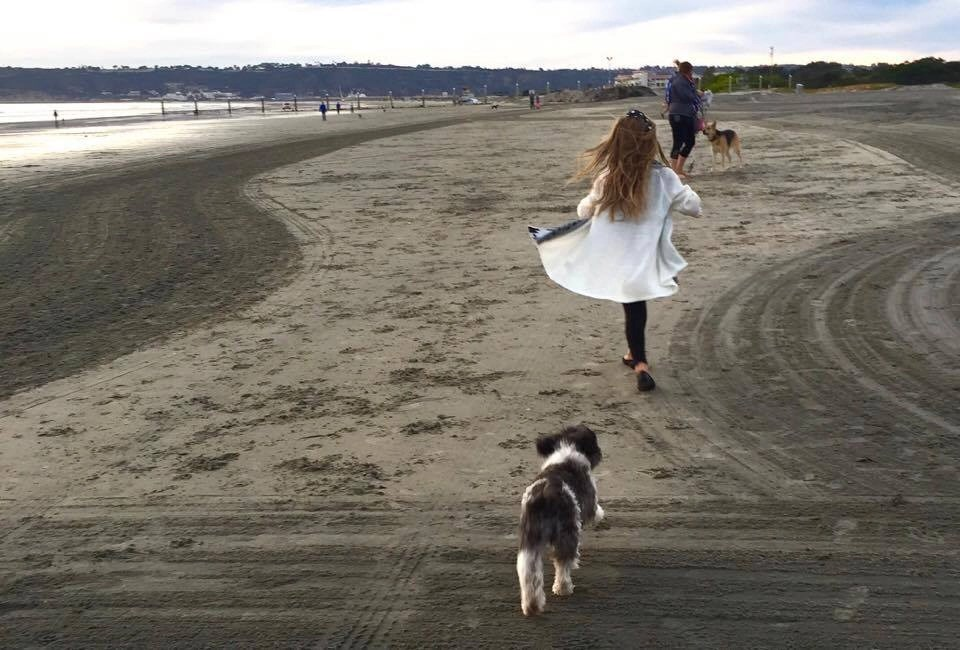 The Ultimate Guide to Pet-Friendly Travel. Everything you need to know about taking your pet on vacation including what to pack for your dog on vacation, safety tips and more.
