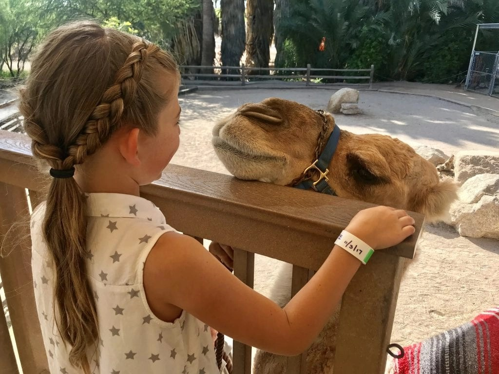 Phoenix Zoo where you can ride a camel. AD- Check out our ULTIMATE Things to do in Tempe AZ where you will find the best activities, attractions, and restaurants for your next visit to Tempe with kids in tow.