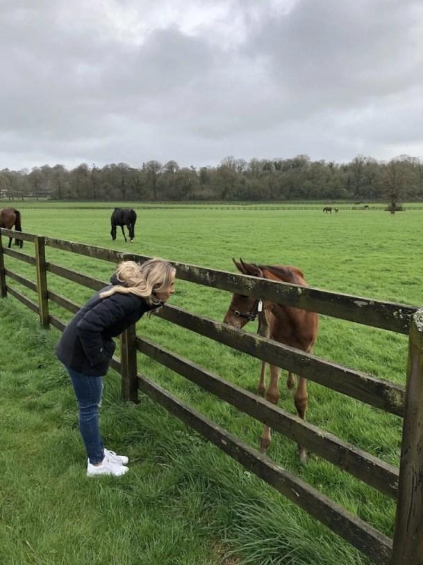Horses at Mount Juliette Estates