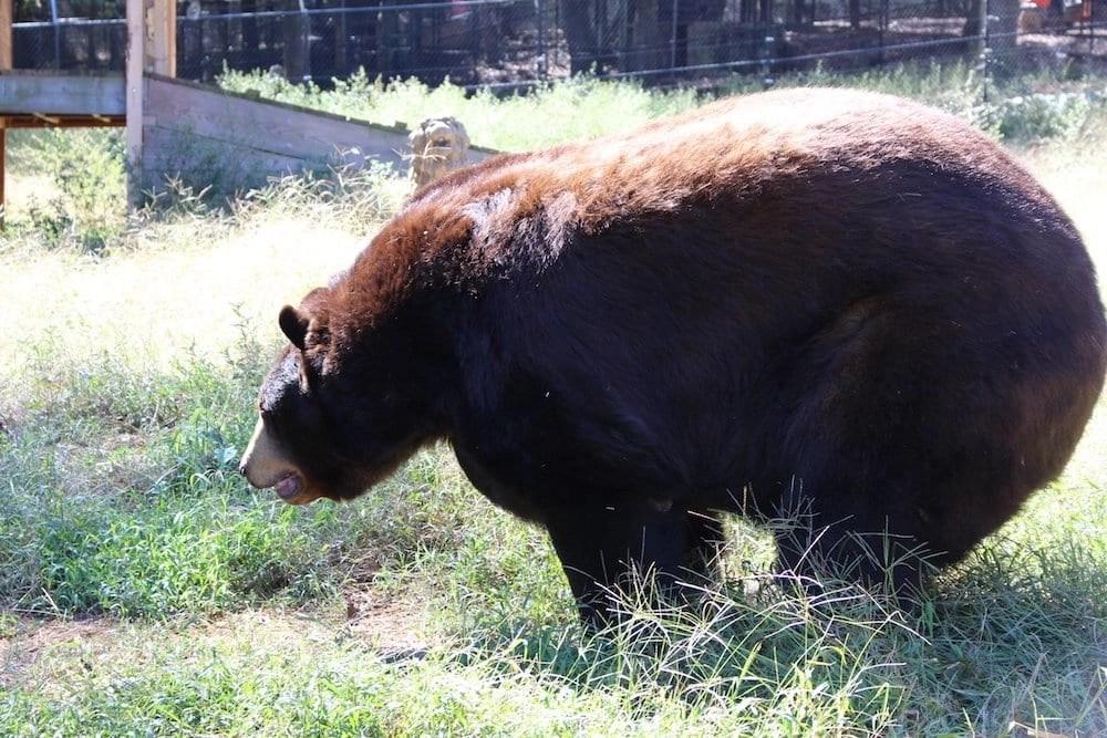 Noahs Ark Zoo