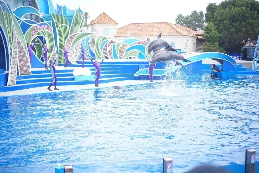 Sea World Tips - See Dolphin Days