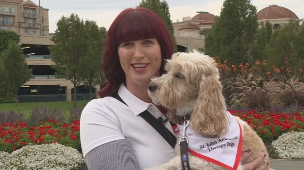 Therapy dogs visit North Okanagan COVID-19 vaccine clinic to help calm needle anxiety