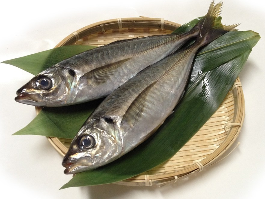 Aji – Horse mackerel Image
