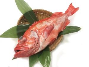 Akoudai / Menuke - Red rockfish Image