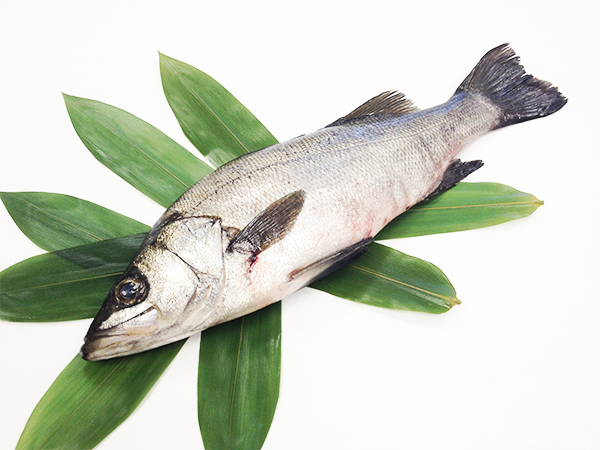 Hira Suzuki - Japanese sea bass Image