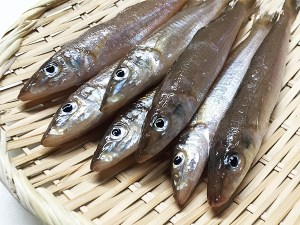 Kisu - Smelt / whitings Image