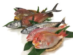 Omakase Fish Box - Delux Image