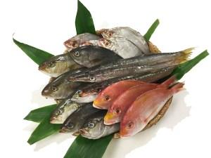 Omakase Fish Box - Regular Image
