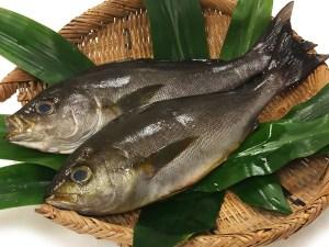 Isaki - Japanese grunt fish Image
