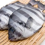 ISHIDAI - Striped bakefish