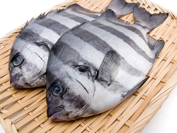 Ishidai - Striped bakefish Image