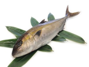 Kanpachi - Amberjack Farm-raised Image