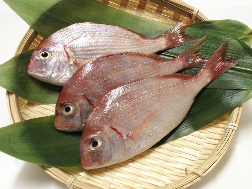 Kasugo - Crimson sea bream Image