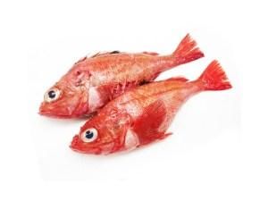Kinki - Kichiji rock fish Image