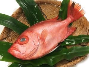 Kintokidai - Red big eye Image